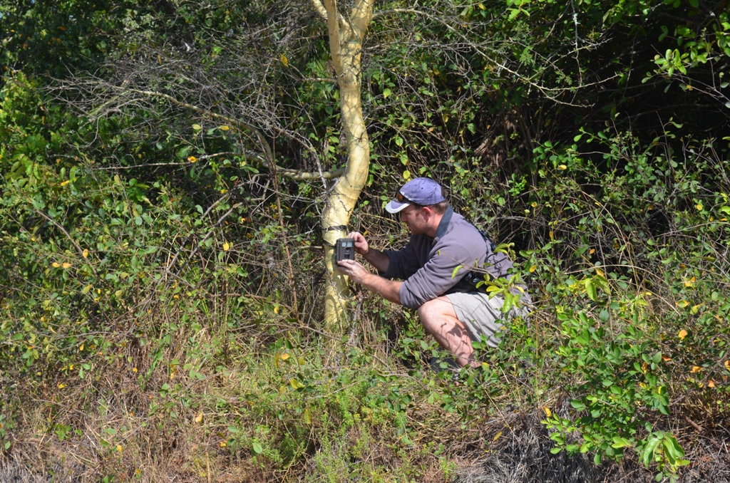 Checking a camera trap