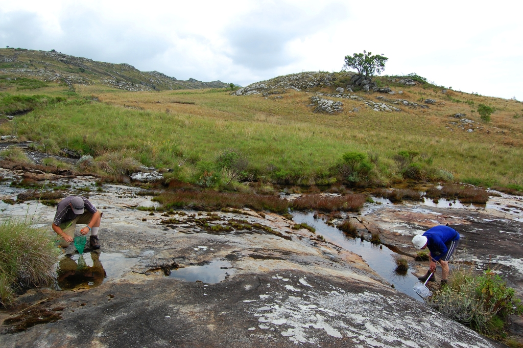 Frog surveying on the plateau of Mt Mulanje Malawi